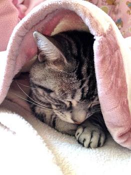 20130216猫.jpg